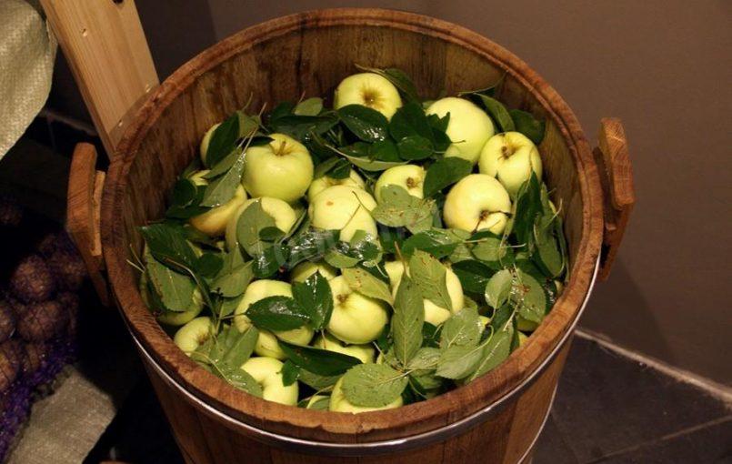 Состав заливки: на 9,5 литра воды, 150 г соли, 230 г сахара, 100 г солода, 120 г сухой горчицы. Яблоки, используемые для мочения, должны быть здоровыми, без трещин и червоточин, лучше осенних и осенне-зимних сортов. Перед укладкой в кадки яблоки тщательно промывают. Дно и стенки кадки выстилают чистой ошпаренной ржаной или пшеничной соломой, ряды яблок […]